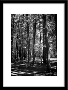 Ref #6189-S Photo © LenScape Photography